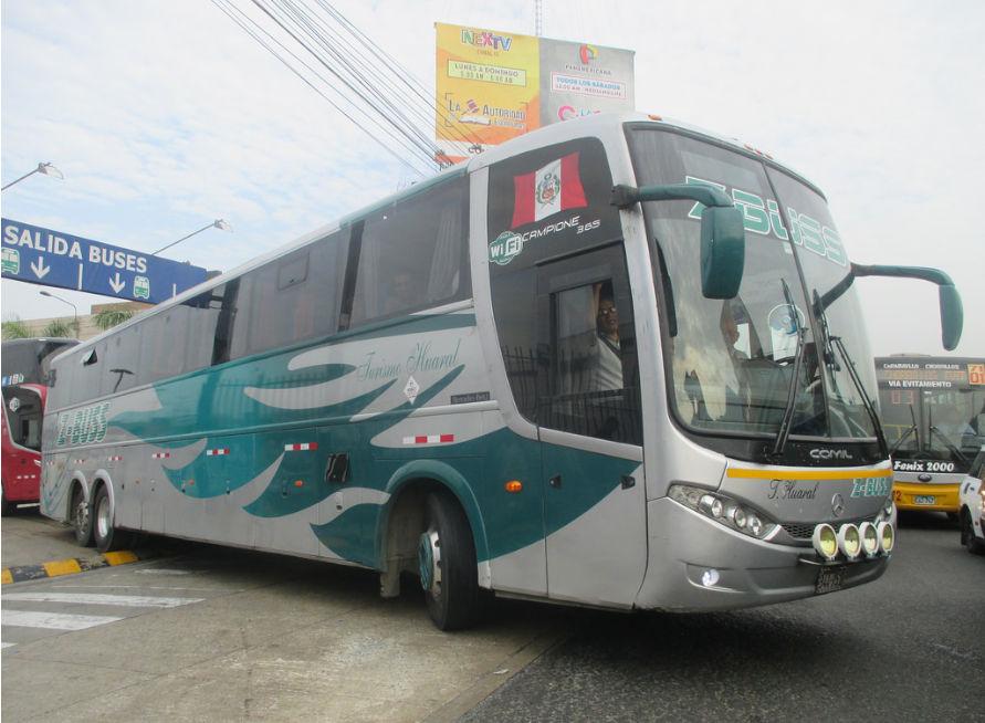 Z Buss Bus